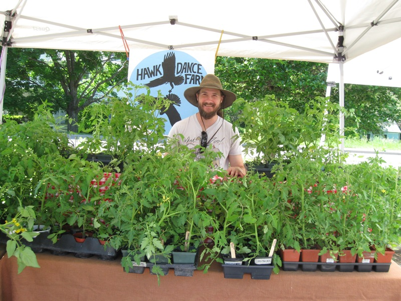 Selling plants at market
